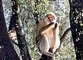 Monkey to banana.jpg
