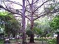 Mooca, São Paulo - State of São Paulo, Brazil - panoramio - Fernando Soares de S… (6).jpg