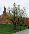 Moscow OaksAlexandovskyGarden M15.jpg