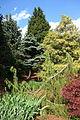 Mount Airy Arboretum - DSC03786.JPG