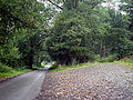 NCR 81 at Middle Gwerneirin Wood - geograph.org.uk - 967274.jpg
