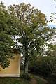 NSG Goldberg, Reisenberg 09.jpg