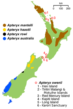 NZ-kiwimap 5 species 02.png