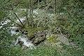 Natur in der Rabischschlucht 20190819 028.jpg