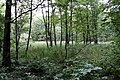 Natural monument Meandry Chřibské Kamenice in 2014 (1).JPG