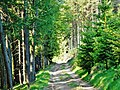 Naturpark Rothaargebirge - panoramio (4).jpg