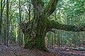 Naturschutzgebiet Belchen - Belchen Bild 13.jpg