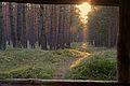 Neu-Vehlefanz Waldweg im Sonnenuntergang.JPG