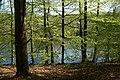 Neuenkirchener See im Biosphärenreservat Schaalsee.jpg