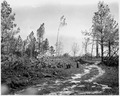 Newberry County, South Carolina. Indiscriminate cutting on private forest lands within the National . . . - NARA - 522816.tif