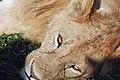 Ngorongoro 2012 05 30 2580 (7500984358).jpg
