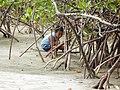 Niño en el manglar La Mochila.jpg