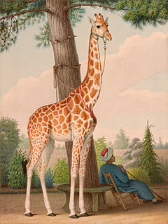 giraffe given to Charles X of France by Muhammad Ali of Egypt