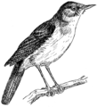 Nightingale 2 (PSF).png