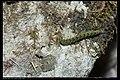 Noctuidae (8451713431).jpg