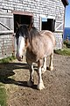 Nova Scotia 2014-10-06 012 (14908358263).jpg