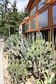 Nyíregyháza Zoo, succulents-4.jpg