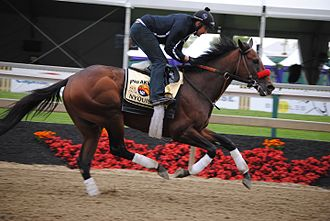 Nyquist (horse) - Nyquist in a workout prior to the 2016 Preakness