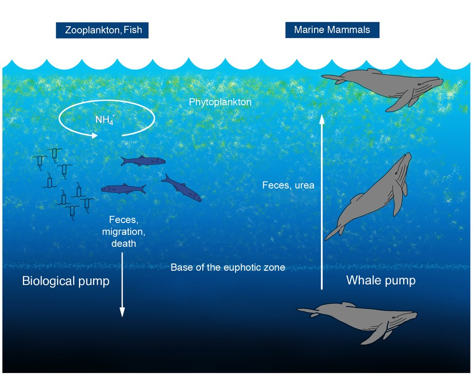 Oceanic whale pump - journal.pone.0013255.g001.tiff