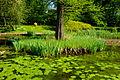 Ogród Botaniczny 006.JPG