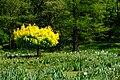 Ogród Botaniczny 010.JPG
