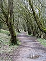 Old railway line out of Tetbury - March 2012 - panoramio (1).jpg
