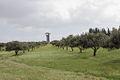 Olives Park at Ramat Rachel (8581845799).jpg
