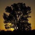 One tree (8963870132).jpg