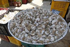 Open street food market in Bizerte 02.jpg