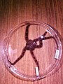 Ophiuroidea (USNM 1503366) 003.jpeg