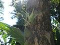Orchid (6562038491).jpg