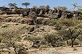 Oromia IMG 5597 Ethiopia (24931681417).jpg