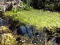 Orto botanico di Napoli 54.jpg