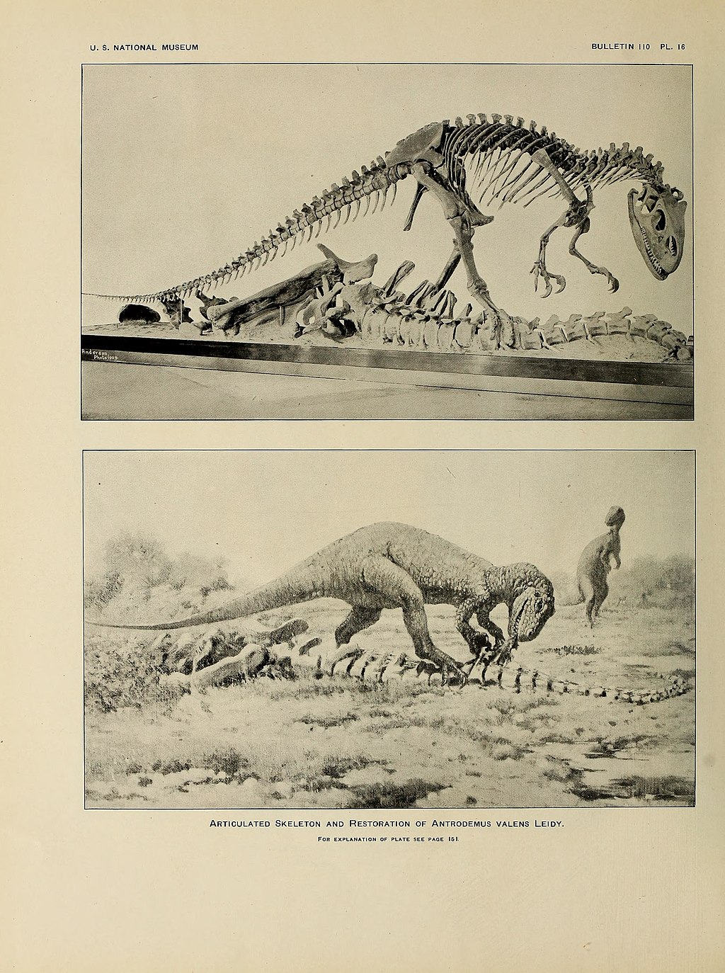 Osteology of the carnivorous Dinosauria in the United States National museum BHL40623207.jpg