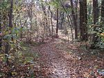 Overton Park Old Forest Trail Memphis TN 1.jpg