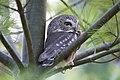 Owl Night Long.jpg