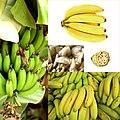 Owoce Banan.jpg