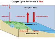 Diagramm des Sauerstoffkreislaufs