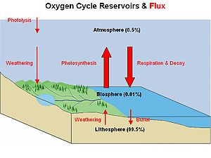 Ecological economics - Image: Oxygen Cycle