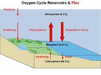 Environmental economics - Image: Oxygen Cycle