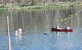 Paddling with water dogs on the Shen (8553619167).jpg