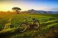Paddy fields in Sukoharjo Regency, Central Java, Indonesia.jpg