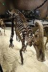 Parasaurolophus cyrtocristatus salt lake city.jpg