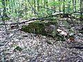 Parc-nature du Bois-de-l-ile-Bizard 22.jpg