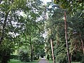 Parcul Central - Bistrita (964840087).jpg