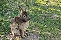 """Parcul de Animale - """"Moara de Vant"""" (8110156142).jpg"""