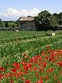 Park von Saint Paul de Mausole02.jpg