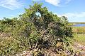 Parque Nacional da Restinga de Jurubatiba 10.jpg