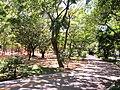 Parque da Jaqueira - Recife, Pernambuco, Brasil (8647108917).jpg