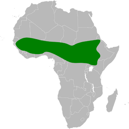 Parus guineensis distribution map.png
